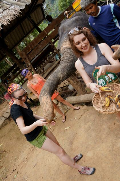 Feeding elephants in Thailand.